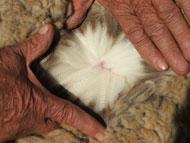 Visually checking merino wool