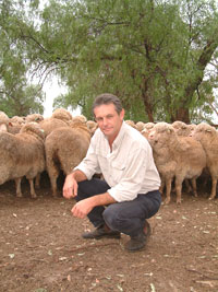 Orange-based NSW Department of Primary Industries researcher Pat Taylor with some of the QPLU$ Merino flock at Trangie.
